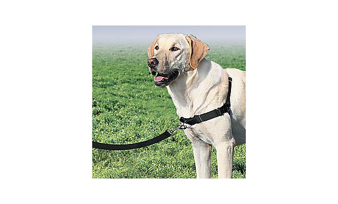 美國PetSafe貝適安輕鬆走防暴衝胸背帶 S / M,覆盆子/灰色